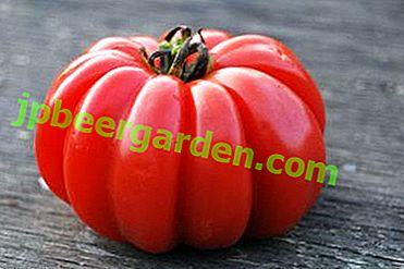 """Sorpresa del mondo dei pomodori - descrizione delle caratteristiche della varietà di pomodori """"Cipolle ai funghi"""""""