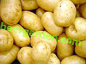 60-дневен Triumph картоф: описание на клас за любителите на ранните картофи