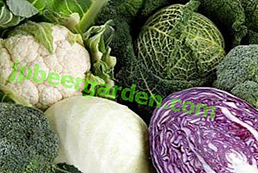 Vitamines, calories et composition chimique utiles de différents types de chou