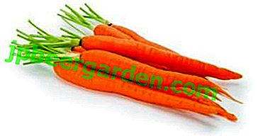 Was sind die Vor- und Nachteile von Karotten für Männer?  Hilft es, Potenz und Beschwerden zu verbessern?