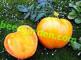Soleil doux dans votre jardin - description et caractéristiques de la tomate Honey Spas