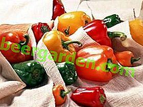 Wie hält man frische Paprika für den Winter im Kühlschrank und Keller?