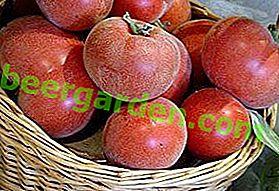 Домат и праскова в една бутилка!  Описание на подвида домат: жълто, червено и розово F1