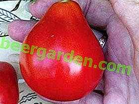 Хороший гібридний сорт томата для теплиць і відкритого грунту - «Трюфель Червоний»