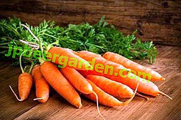 La composition chimique et la teneur en calories des carottes: pourquoi est-il important de savoir?  Comment manger un légume pour absorber la vitamine A?