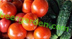 Огірки і помідори в одній теплиці з полікарбонату: як посадити, вирощування, сумісність, догляд