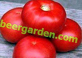 """Eigenschaften und Beschreibung der Tomatensorte """"La La La Fa"""" F1: mit Vergnügen wachsen und essen"""