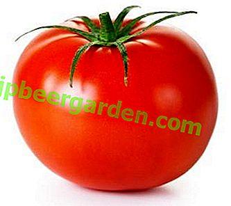 Смачний помідор для любителів плодів з кислинкою - опис гібридного сорту томату «Любов»