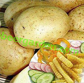 Права посластица - кромпир Ласунок: опис сорте, карактеристике, фотографија