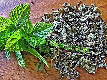 pierderea în greutate folosind frunze de menta)