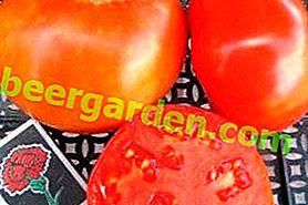 """Frühreife Tomate """"Samara"""": Sortenbeschreibung und Foto"""