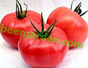 """Hybride à gros fruits à cultiver en serre - tomate """"Romarin"""": caractéristiques, description de la variété, photo"""