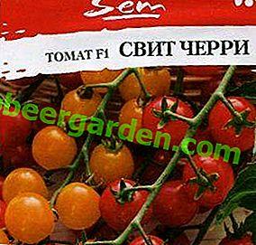 """Unbestimmte Hybride - Tomate """"Sweet Cherry"""" F1: Foto, Beschreibung und Merkmale des wachsenden """"Candy Tree"""""""