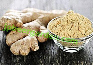 Nützliche Ingwerwurzel: Beliebte Rezepte für Tee und andere Verbindungen mit Zitrone und Honig zur Stärkung der Immunität