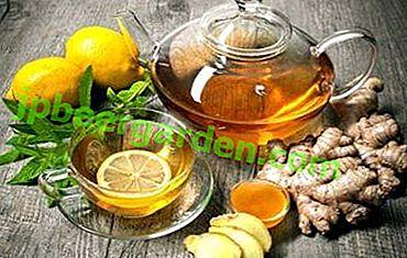 Co to jest zdrowa mieszanka imbiru i miodu?  Przepisy na odchudzanie z cytryną i innymi składnikami