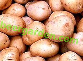 Cartofi finlandezi Timo: fără pretenții, precoce, cu un randament ridicat