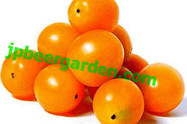 """Uprawa wczesnej dojrzałej odmiany pomidorów cherry - pomidor """"Yellow Cherry"""""""