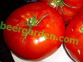Перевірений усіма томат «Кумир»: опис сорту і секрети вирощування помідорів