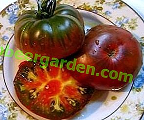 """O varietate excelentă de masă de roșii, cu o culoare neobișnuită - tomate """"țigănească"""""""
