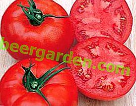 Pomodoro delizioso delizioso per il tuo sito - Katyusha