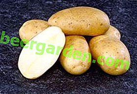 """Deutsche Qualität in unseren Betten: """"Ramos"""" -Kartoffeln - Beschreibung der Sorte mit detaillierten Eigenschaften und reichlich vorhandenen Fotos"""
