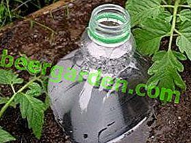 Come organizzare l'irrigazione sotterranea in una serra usando bottiglie di plastica scavate?