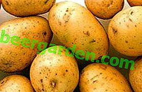 Beauté sans défauts - Pommes de terre Agata: description de la variété, caractéristiques, photo