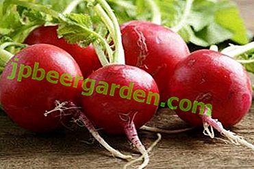 Zarya di ravanello precoce: descrizione con foto, coltivazione e varietà simili