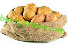 Landwirt ultra-frühe Kartoffel: Sortenbeschreibung, Foto, detaillierte Beschreibung