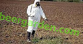 Како се носити са крумпировим нематодама у земљишту: методе и средства за контролу