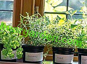 Mini-Gewächshaus zum Selbermachen für Setzlinge auf der Fensterbank
