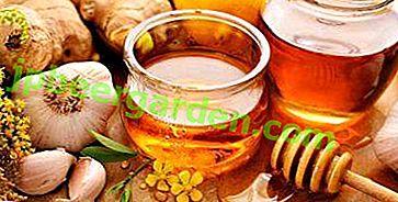Was sind die Vorteile von Knoblauch, Zitrone und Honig für die Reinigung von Gefäßen?  Klassische und andere Rezepte Heilmittel aus diesen Produkten