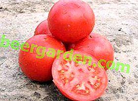 Гібрид голландської селекції - томат сорти «Тарпан» f1: фото, опис і характеристики