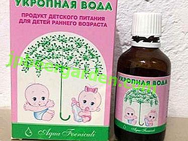 Comment faire et appliquer de l'eau d'aneth pour les nouveau-nés?