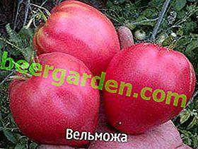 """Най-добрият сорт сибирски селекционен домат """"Nobleman"""", описание, характеристики, препоръки"""