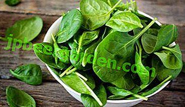 Поради про те, як правильно збирати шпинат.  Скільки врожаїв на рік можна отримати?