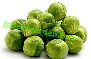 Propriétés des choux de Bruxelles - avantages, inconvénients, valeur nutritionnelle