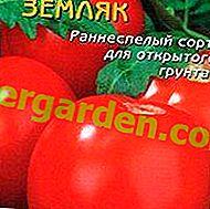 """Leckere Grüße aus Sibirien - Tomate """"Countryman"""": Eigenschaften, Beschreibung der Tomatensorte und deren Fotos"""
