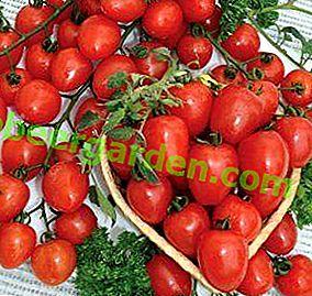 """E non una bacca, ma un pomodoro!  Vantaggi e svantaggi delle varietà di pomodori """"Cherry Strawberry"""" F1"""