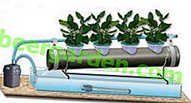 Hydroponische Gewächshäuser: Anbau von Gemüse und Gemüse auf moderne Weise