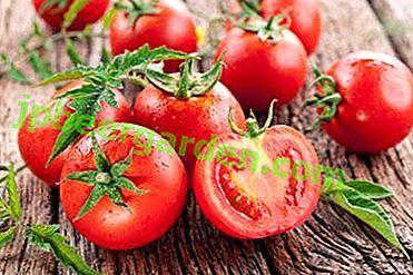 Warum ist die richtige Wahl wichtig und welche Tomaten werden am besten gepflanzt, um eine reichhaltige Ernte köstlicher Tomaten zu erhalten?