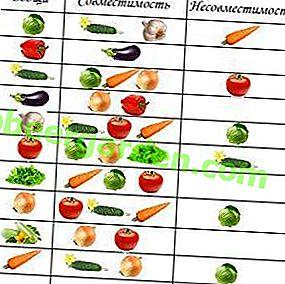 Compatibilité avec les cultures: est-il possible de planter des concombres, des tomates et des poivrons dans la même serre?