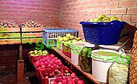 Comment se débarrasser des limaces dans le sous-sol: remèdes chimiques et folkloriques