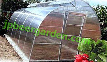 Редиска в теплиці з полікарбонату: коли і як садити насіння, щоб отримати хороший урожай?