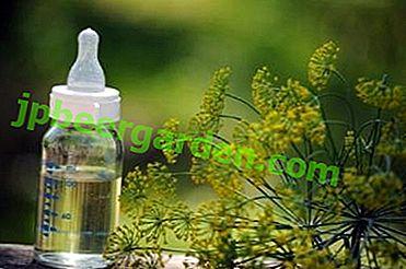 Die Verwendung von Dill für ein Neugeborenes: Ist es nützlich, gibt es irgendwelche Einschränkungen, wie man Samen braut und andere Nuancen