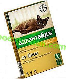 Nur ein bisschen, aber wie es spart!  Vorteil Flohtropfen für Katzen, Anweisungen für das Medikament