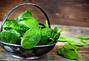 Ist es möglich, Spinat während des Stillens zu essen und wie ist es nützlich?  Schritt-für-Schritt-Rezepte zum Kochen