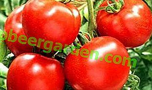 """Eine ideale Tomate mit einem ungewöhnlichen Namen - """"Apfel Russlands"""": Sortenbeschreibung, Eigenschaften und Foto"""