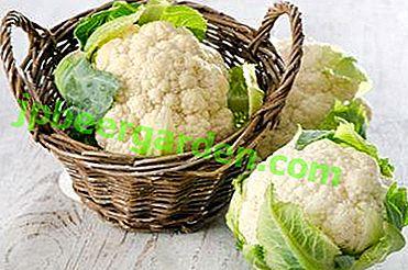 Die Zusammensetzung und der Kaloriengehalt von Blumenkohl.  Die Vorteile und Nachteile von Gemüse für den Körper