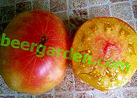"""Висока реколта от сибирски животновъди - сорт домати """"Мистерията на природата"""""""